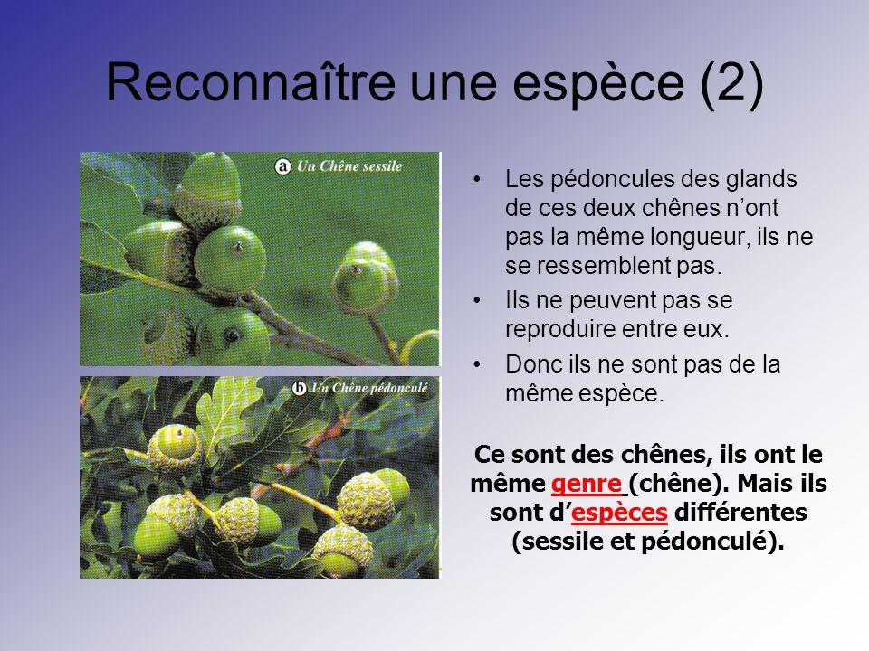 Reconnaître une espèce (2) Les pédoncules des glands de ces deux chênes nont pas la même longueur, ils ne se ressemblent pas. Ils ne peuvent pas se re