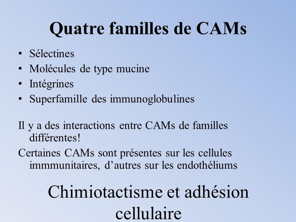 Quatre familles de CAMs Sélectines Molécules de type mucine Intégrines Superfamille des immunoglobulines Il y a des interactions entre CAMs de famille