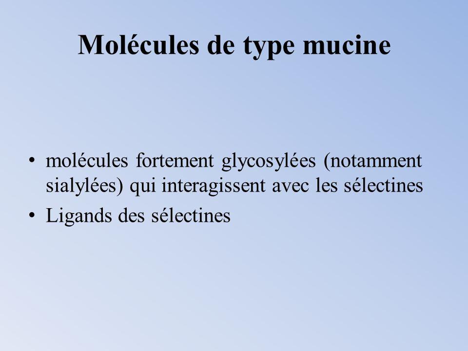 Molécules de type mucine molécules fortement glycosylées (notamment sialylées) qui interagissent avec les sélectines Ligands des sélectines