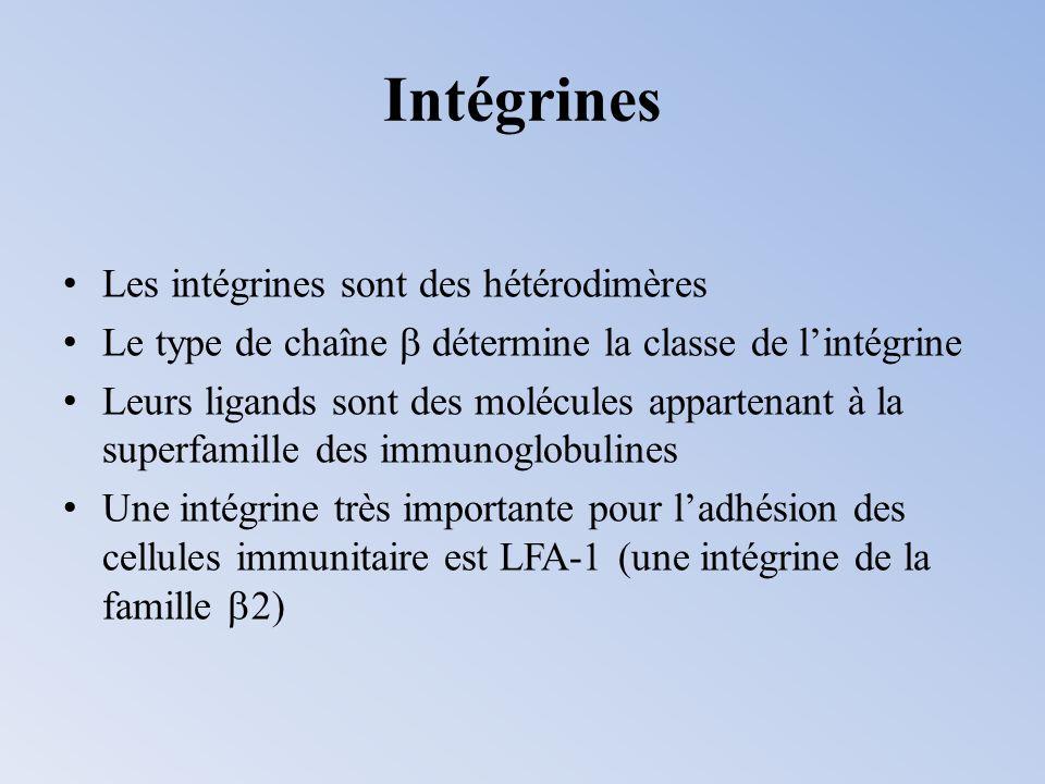 Intégrines Les intégrines sont des hétérodimères Le type de chaîne détermine la classe de lintégrine Leurs ligands sont des molécules appartenant à la