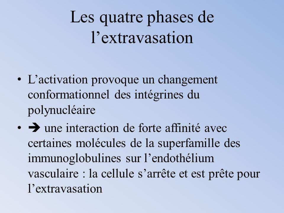 Les quatre phases de lextravasation Lactivation provoque un changement conformationnel des intégrines du polynucléaire une interaction de forte affini