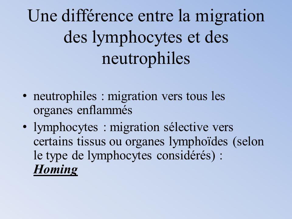 Une différence entre la migration des lymphocytes et des neutrophiles neutrophiles : migration vers tous les organes enflammés lymphocytes : migration