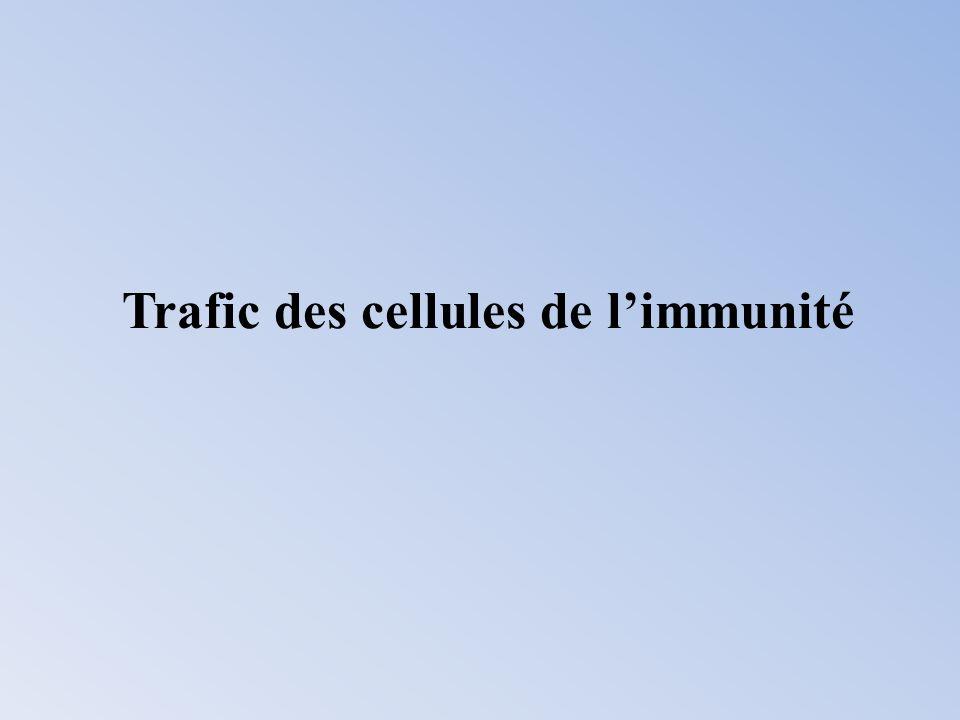 Les différentes cellules immunitaires (neutrophiles, éosinophiles, macrophages, LB, T h1, T h2, cytotoxiques, NK) ont des jeux de récepteurs chimiokiniques différents