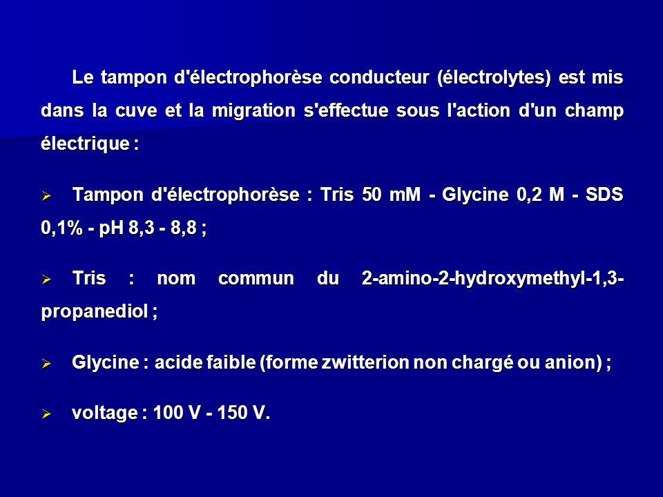 Le tampon d'électrophorèse conducteur (électrolytes) est mis dans la cuve et la migration s'effectue sous l'action d'un champ électrique : Tampon d'él