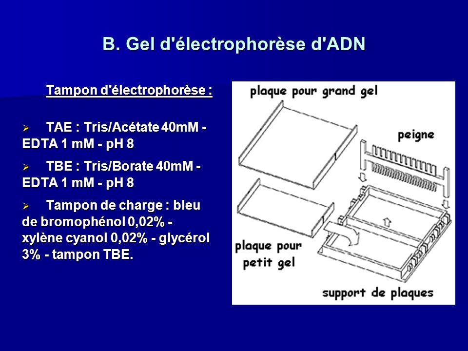 Tampon d'électrophorèse : TAE : Tris/Acétate 40mM - EDTA 1 mM - pH 8 TAE : Tris/Acétate 40mM - EDTA 1 mM - pH 8 TBE : Tris/Borate 40mM - EDTA 1 mM - p