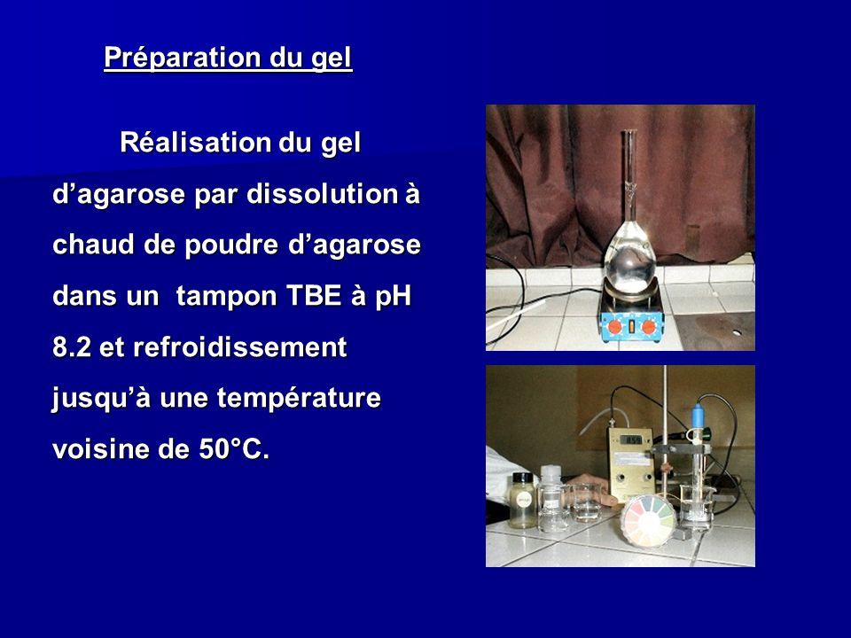 Préparation du gel Réalisation du gel dagarose par dissolution à chaud de poudre dagarose dans un tampon TBE à pH 8.2 et refroidissement jusquà une te