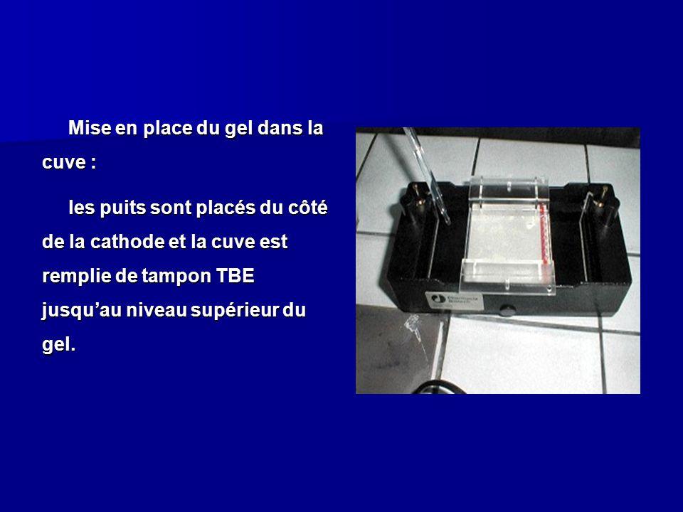 Mise en place du gel dans la cuve : les puits sont placés du côté de la cathode et la cuve est remplie de tampon TBE jusquau niveau supérieur du gel.
