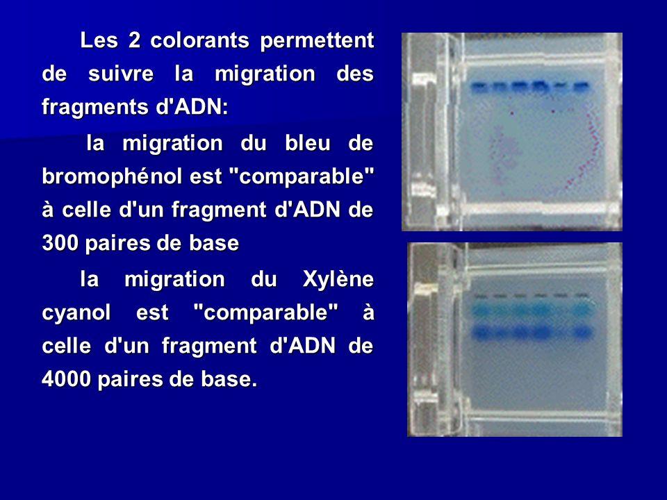 Les 2 colorants permettent de suivre la migration des fragments d'ADN: la migration du bleu de bromophénol est