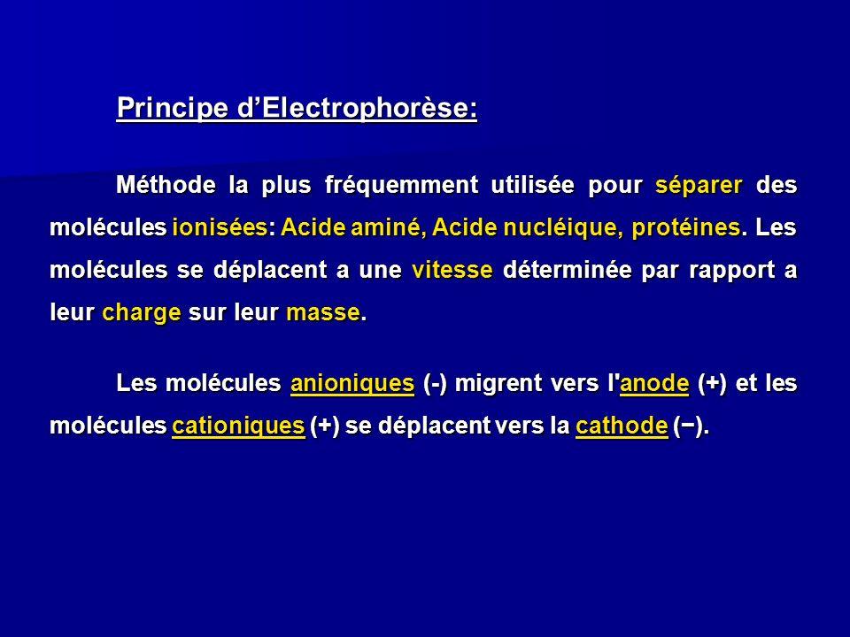 Principe dElectrophorèse: Méthode la plus fréquemment utilisée pour séparer des molécules ionisées: Acide aminé, Acide nucléique, protéines. Les moléc