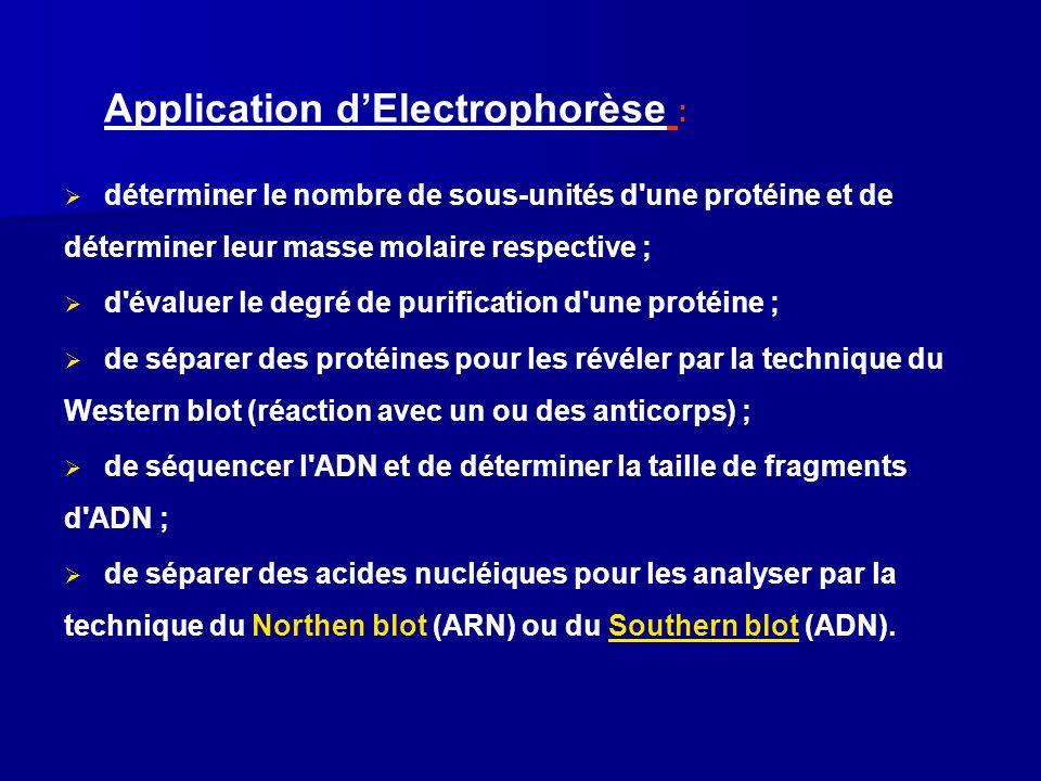 Application dElectrophorèse : déterminer le nombre de sous-unités d'une protéine et de déterminer leur masse molaire respective ; d'évaluer le degré d
