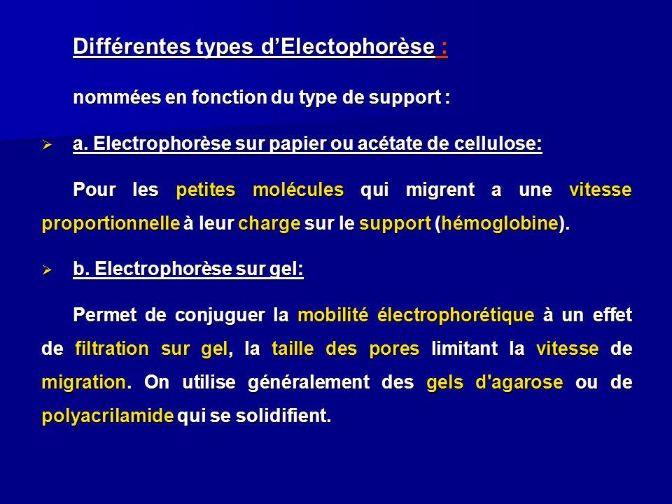 Différentes types dElectophorèse : nommées en fonction du type de support : a. Electrophorèse sur papier ou acétate de cellulose: a. Electrophorèse su