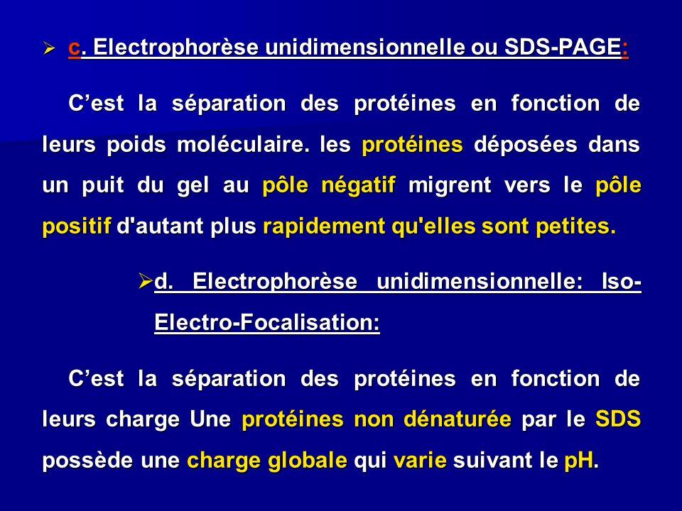 c. Electrophorèse unidimensionnelle ou SDS-PAGE: c. Electrophorèse unidimensionnelle ou SDS-PAGE: Cest la séparation des protéines en fonction de leur