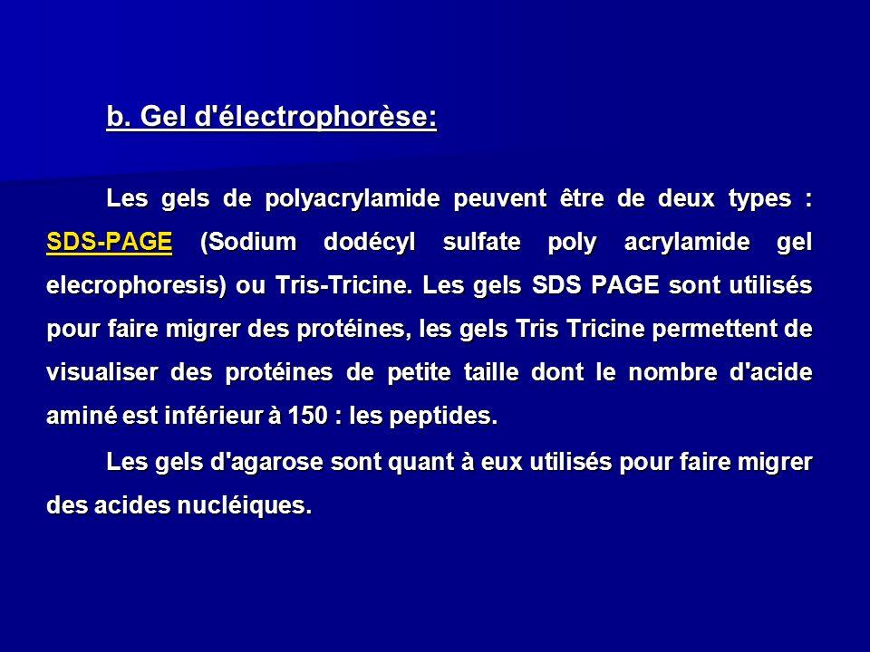 b. Gel d'électrophorèse: Les gels de polyacrylamide peuvent être de deux types : SDS-PAGE (Sodium dodécyl sulfate poly acrylamide gel elecrophoresis)