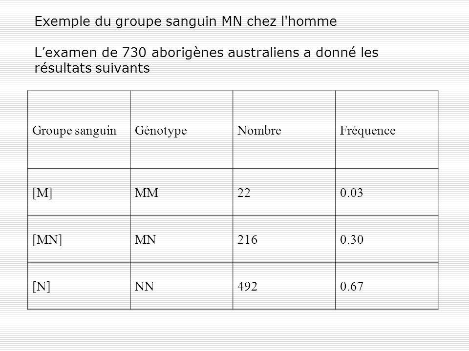Exemple du groupe sanguin MN chez l'homme Lexamen de 730 aborigènes australiens a donné les résultats suivants Groupe sanguinGénotypeNombreFréquence [