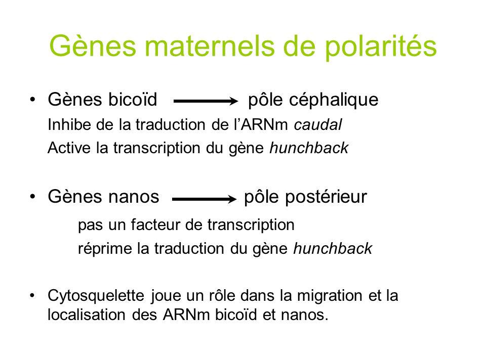 Cartographie des gènes homéotiques Le complexe Antennapedia est constitué de 5 gènes homéobox: –Deformed (Dfd)– mutation affecte les parasegments 0 et 1 –Sex combs reduced (Scr) - mutation affecte les parasegments 2 et 3 –Antennapedia (Antp) – mutation affecte les parasegments 4 et 5 –Labial (Lab) et proboscidea (Pb) – partie de la tête 5´5´ 3´3´ anteriorposterior Structures de la tête et le thorax