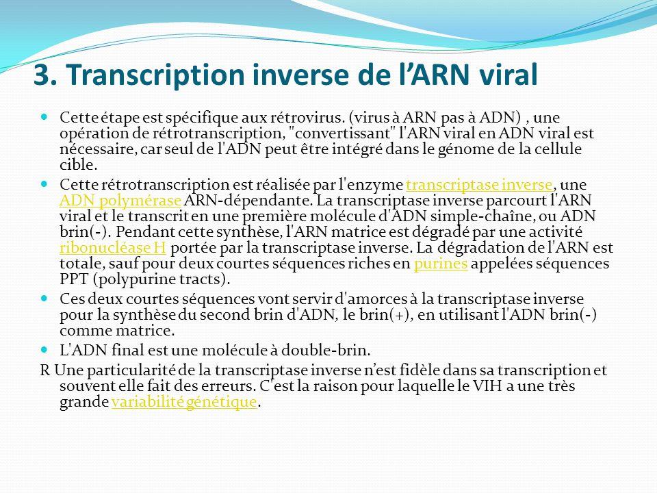 3. Transcription inverse de lARN viral Cette étape est spécifique aux rétrovirus. (virus à ARN pas à ADN), une opération de rétrotranscription,