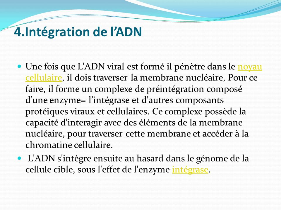 4.Intégration de lADN Une fois que L'ADN viral est formé il pénètre dans le noyau cellulaire, il dois traverser la membrane nucléaire, Pour ce faire,
