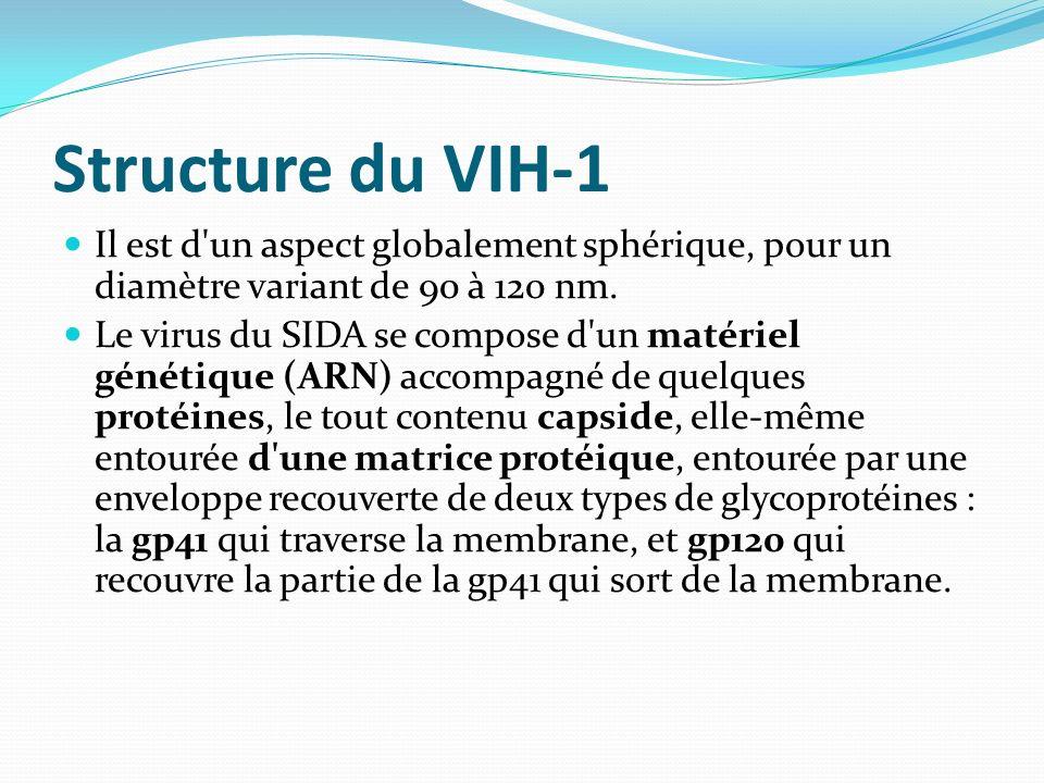 Structure du VIH-1 Il est d'un aspect globalement sphérique, pour un diamètre variant de 90 à 120 nm. Le virus du SIDA se compose d'un matériel généti