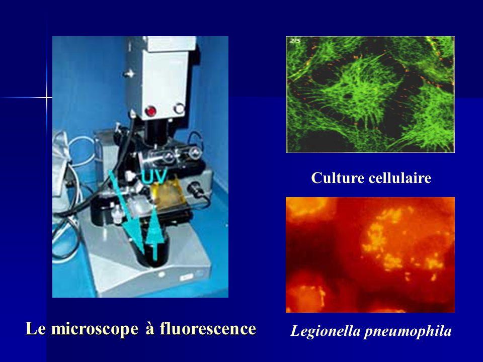 Le microscope à fluorescence Legionella pneumophila Culture cellulaire