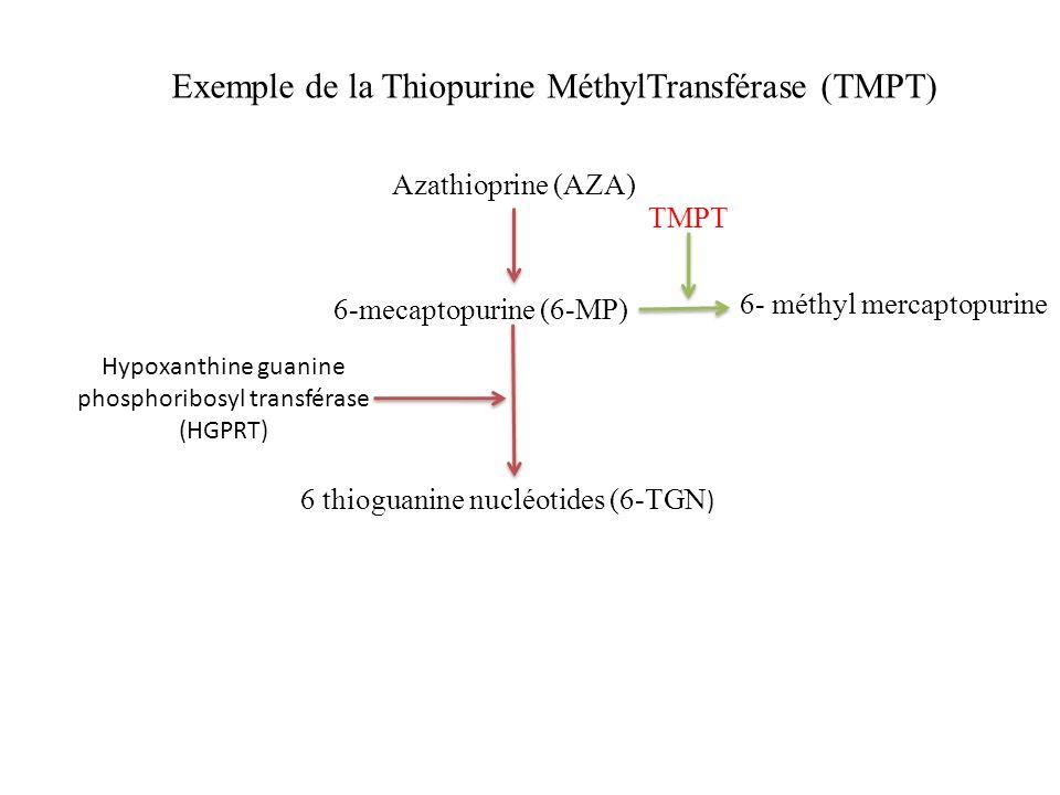 Azathioprine (AZA) 6-mecaptopurine (6-MP) 6 thioguanine nucléotides (6-TGN ) Hypoxanthine guanine phosphoribosyl transférase (HGPRT) 6- méthyl mercapt