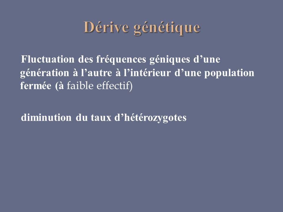 Fluctuation des fréquences géniques dune génération à lautre à lintérieur dune population fermée (à faible effectif) diminution du taux dhétérozygotes