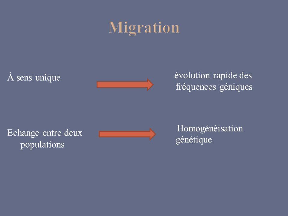 À sens unique Echange entre deux populations évolution rapide des fréquences géniques Homogénéisation génétique