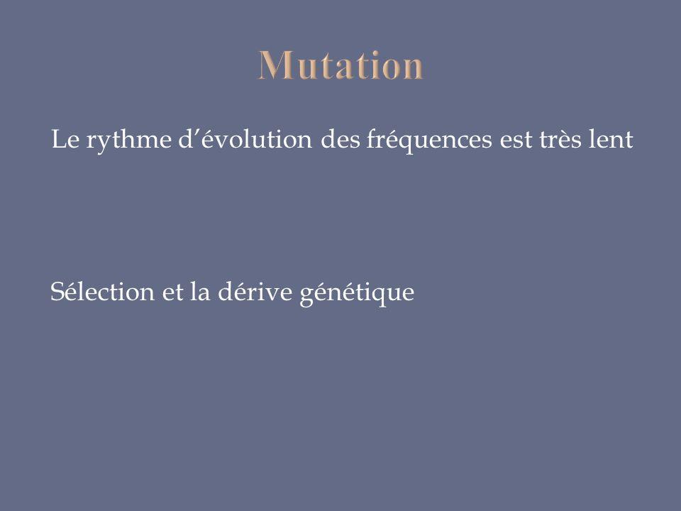 Le rythme dévolution des fréquences est très lent Sélection et la dérive génétique