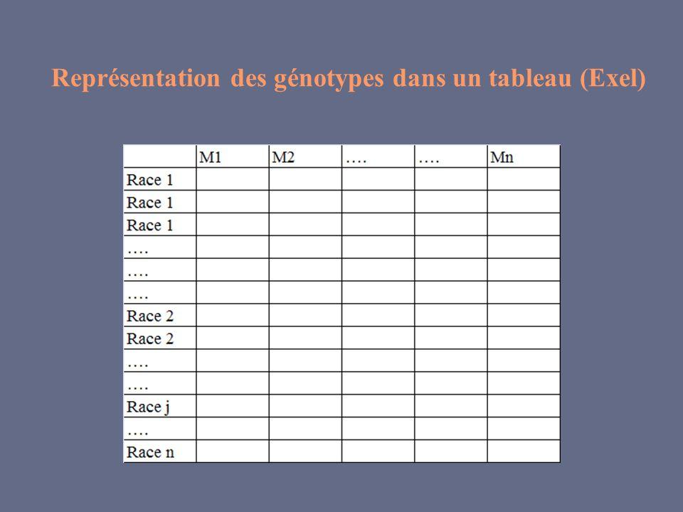 Représentation des génotypes dans un tableau (Exel)