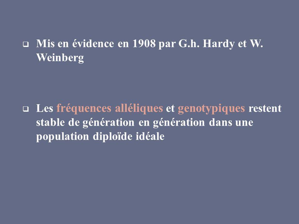 Mis en évidence en 1908 par G.h. Hardy et W. Weinberg Les fréquences alléliques et genotypiques restent stable de génération en génération dans une po