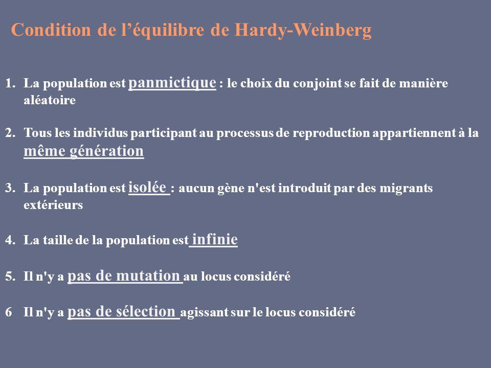 Condition de léquilibre de Hardy-Weinberg 1.La population est panmictique : le choix du conjoint se fait de manière aléatoire 2.Tous les individus par