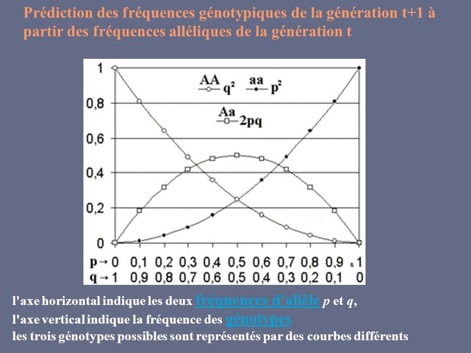 l'axe horizontal indique les deux fréquences d'allèle p et q, fréquences d'allèle l'axe vertical indique la fréquence des génotypes génotypes les troi