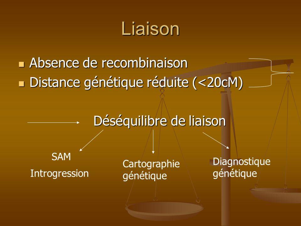 Liaison Absence de recombinaison Absence de recombinaison Distance génétique réduite (<20cM) Distance génétique réduite (<20cM) Déséquilibre de liaiso