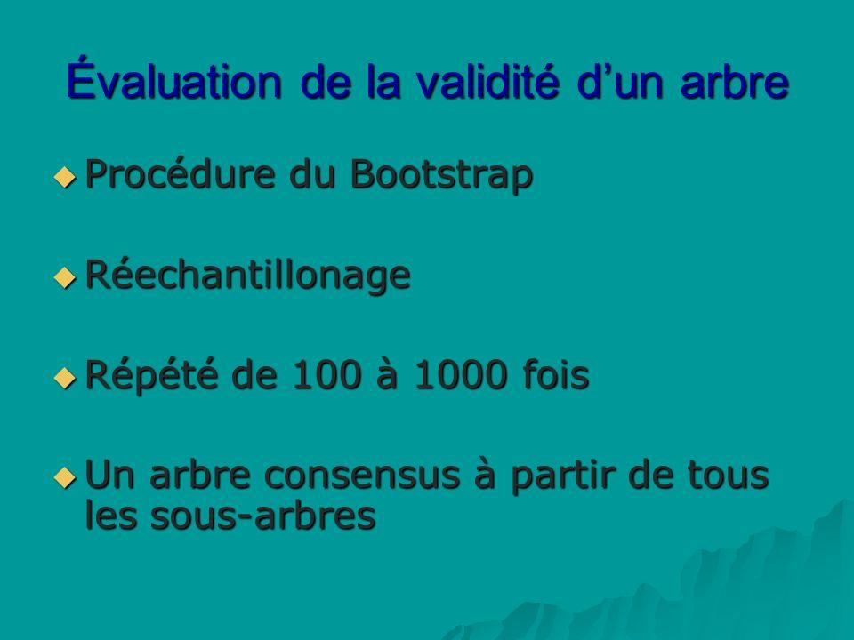 Évaluation de la validité dun arbre Procédure du Bootstrap Procédure du Bootstrap Réechantillonage Réechantillonage Répété de 100 à 1000 fois Répété de 100 à 1000 fois Un arbre consensus à partir de tous les sous-arbres Un arbre consensus à partir de tous les sous-arbres
