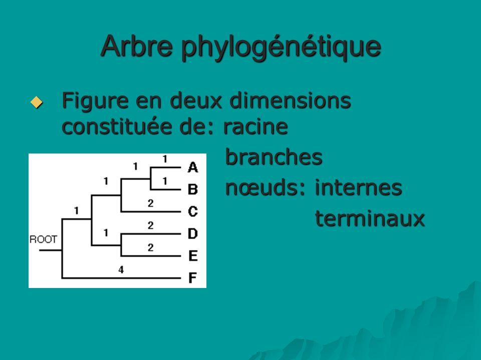 Arbre phylogénétique Figure en deux dimensions constituée de: racine Figure en deux dimensions constituée de: racine branches branches nœuds: internes nœuds: internes terminaux terminaux