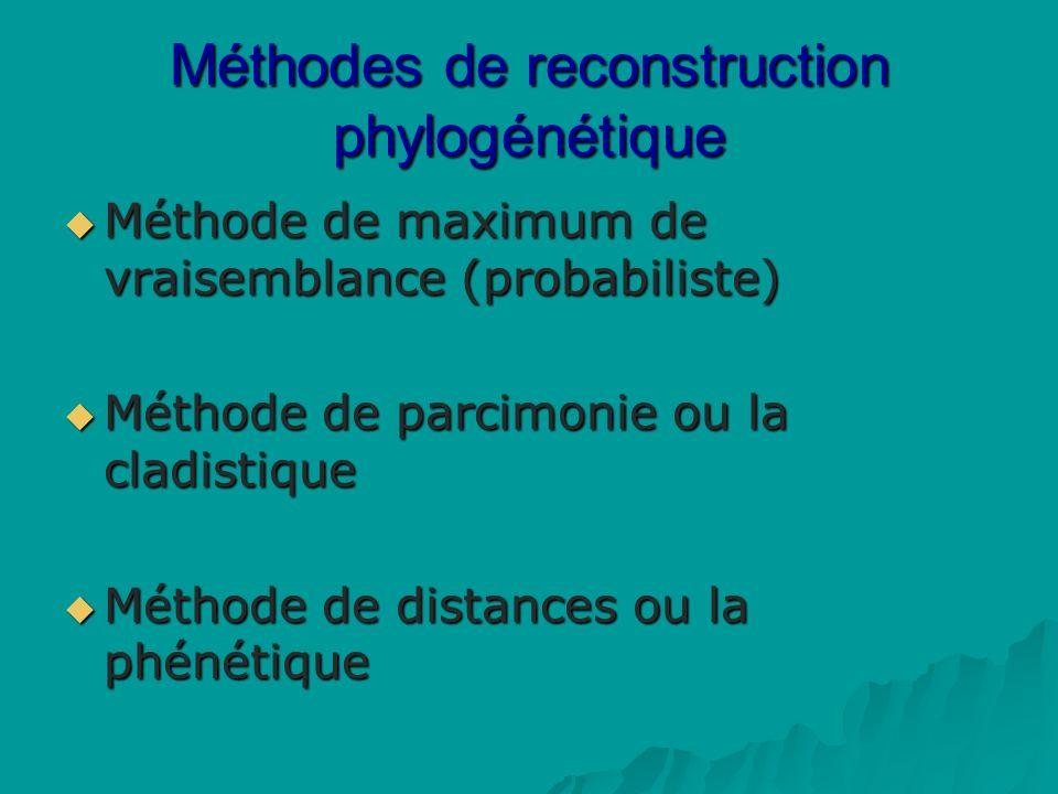 Méthodes de reconstruction phylogénétique Méthode de maximum de vraisemblance (probabiliste) Méthode de maximum de vraisemblance (probabiliste) Méthode de parcimonie ou la cladistique Méthode de parcimonie ou la cladistique Méthode de distances ou la phénétique Méthode de distances ou la phénétique