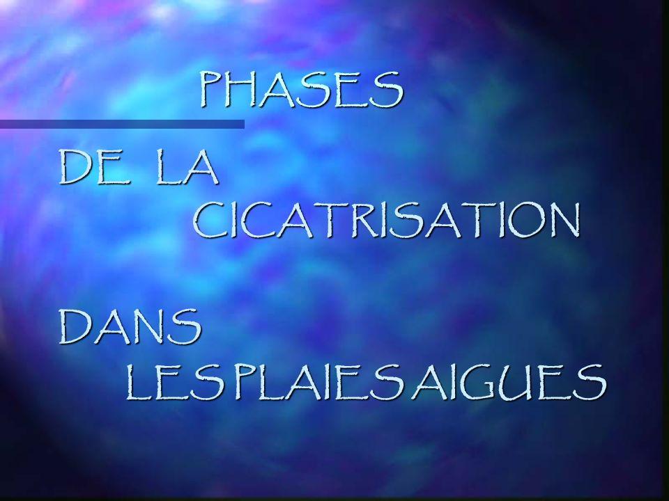 PHASES DE LA CICATRISATIONDANS LES PLAIES AIGUES