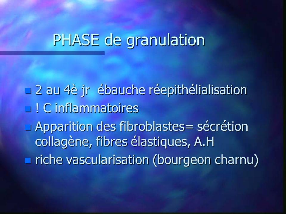 PHASE de granulation n 2 au 4è jr ébauche réepithélialisation n ! C inflammatoires n Apparition des fibroblastes= sécrétion collagène, fibres élastiqu