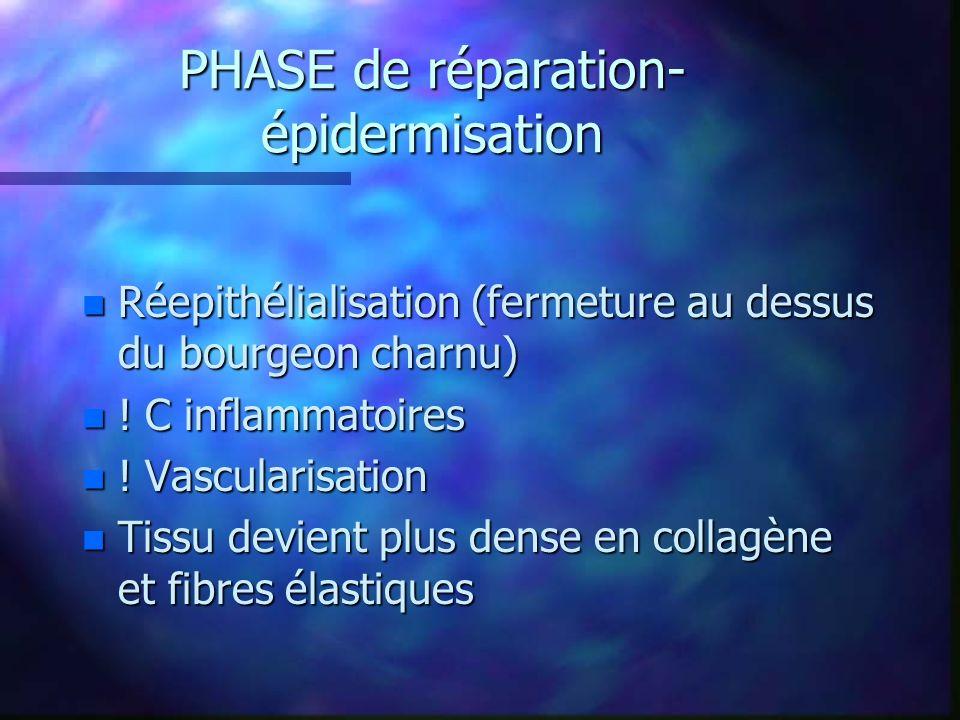PHASE de réparation- épidermisation n Réepithélialisation (fermeture au dessus du bourgeon charnu) n ! C inflammatoires n ! Vascularisation n Tissu de