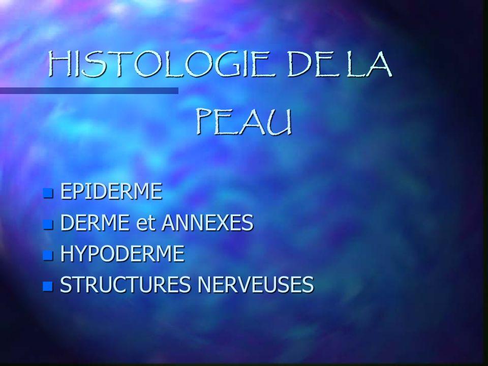 HISTOLOGIE DE LA PEAU n EPIDERME n DERME et ANNEXES n HYPODERME n STRUCTURES NERVEUSES