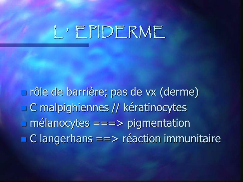 L EPIDERME n rôle de barrière; pas de vx (derme) n C malpighiennes // kératinocytes n mélanocytes ===> pigmentation n C langerhans ==> réaction immuni