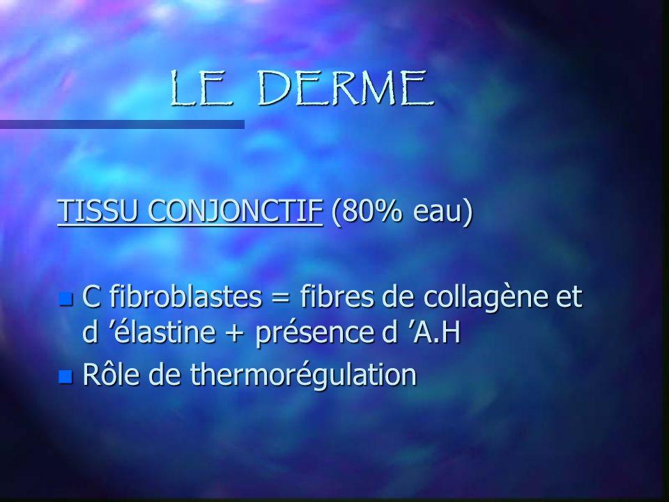 LE DERME TISSU CONJONCTIF (80% eau) n C fibroblastes = fibres de collagène et d élastine + présence d A.H n Rôle de thermorégulation