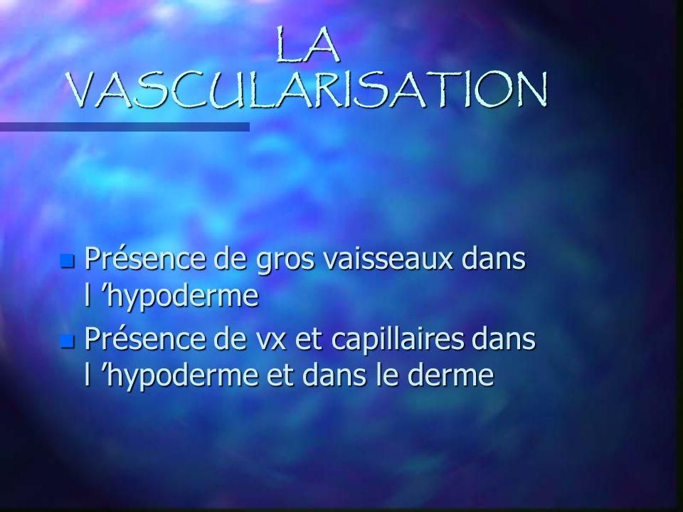 LA VASCULARISATION n Présence de gros vaisseaux dans l hypoderme n Présence de vx et capillaires dans l hypoderme et dans le derme