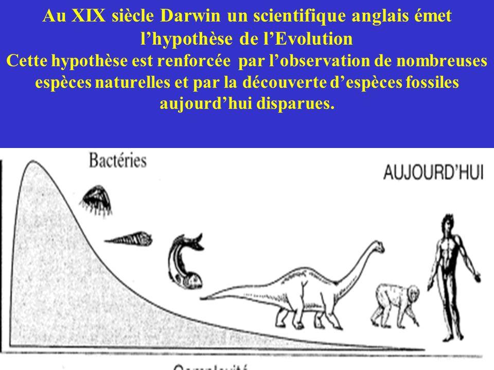 Au XIX siècle Darwin un scientifique anglais émet lhypothèse de lEvolution Cette hypothèse est renforcée par lobservation de nombreuses espèces nature