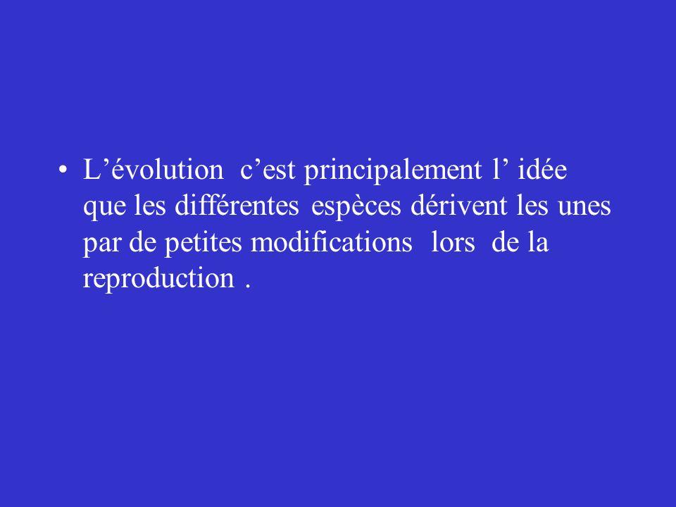 Lévolution cest principalement l idée que les différentes espèces dérivent les unes par de petites modifications lors de la reproduction.