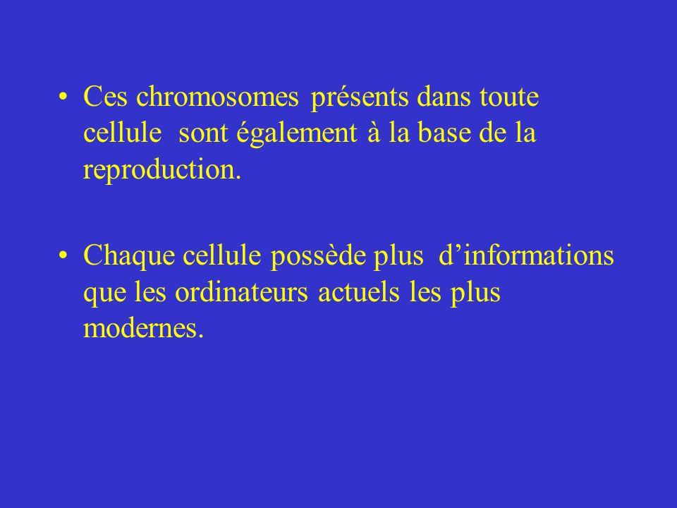 Ces chromosomes présents dans toute cellule sont également à la base de la reproduction. Chaque cellule possède plus dinformations que les ordinateurs