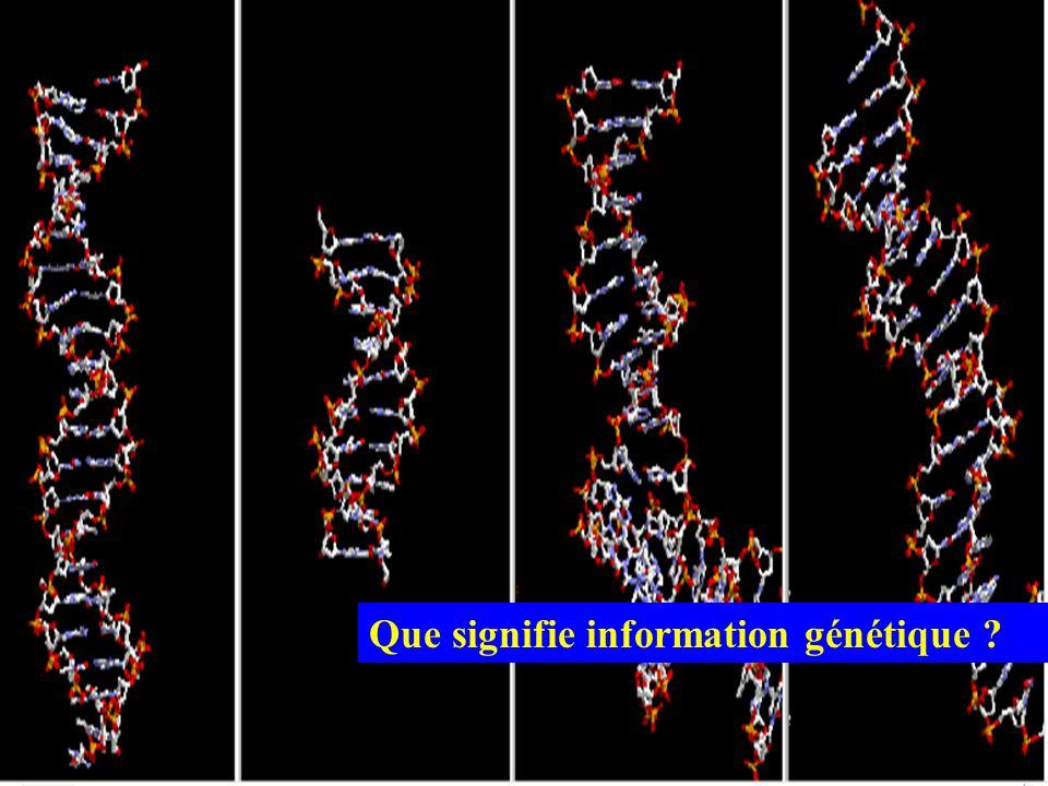 Que signifie information génétique ?