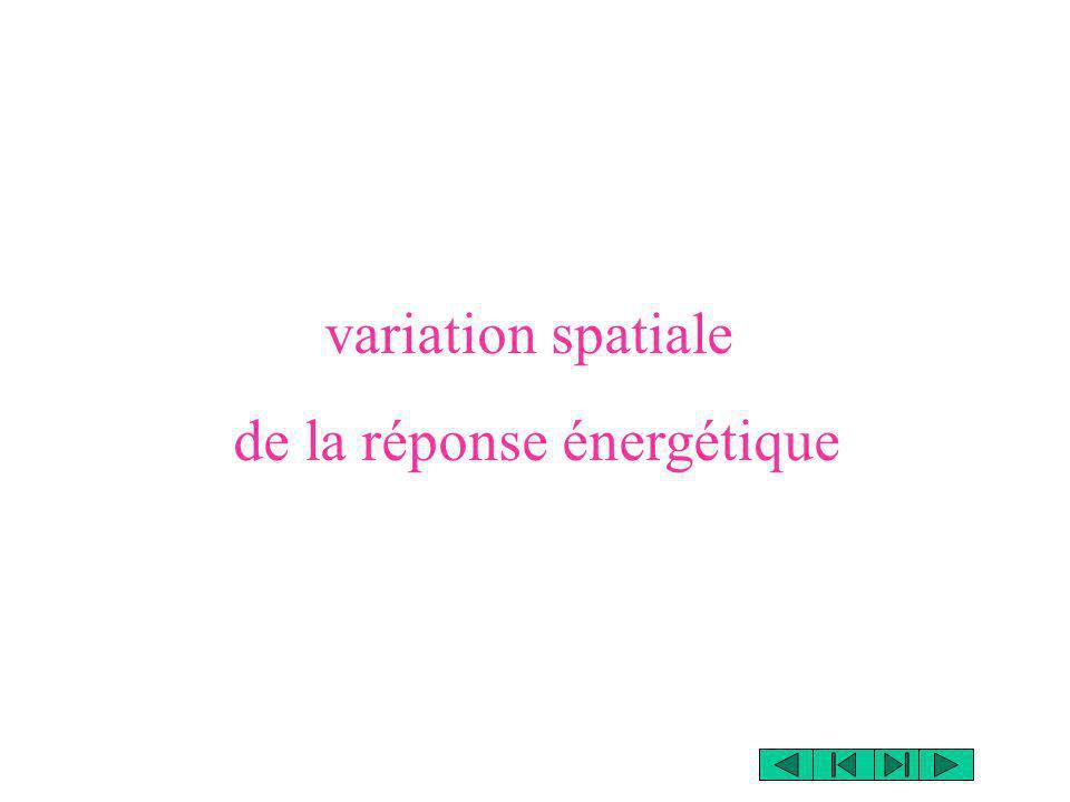 variation spatiale de la réponse énergétique