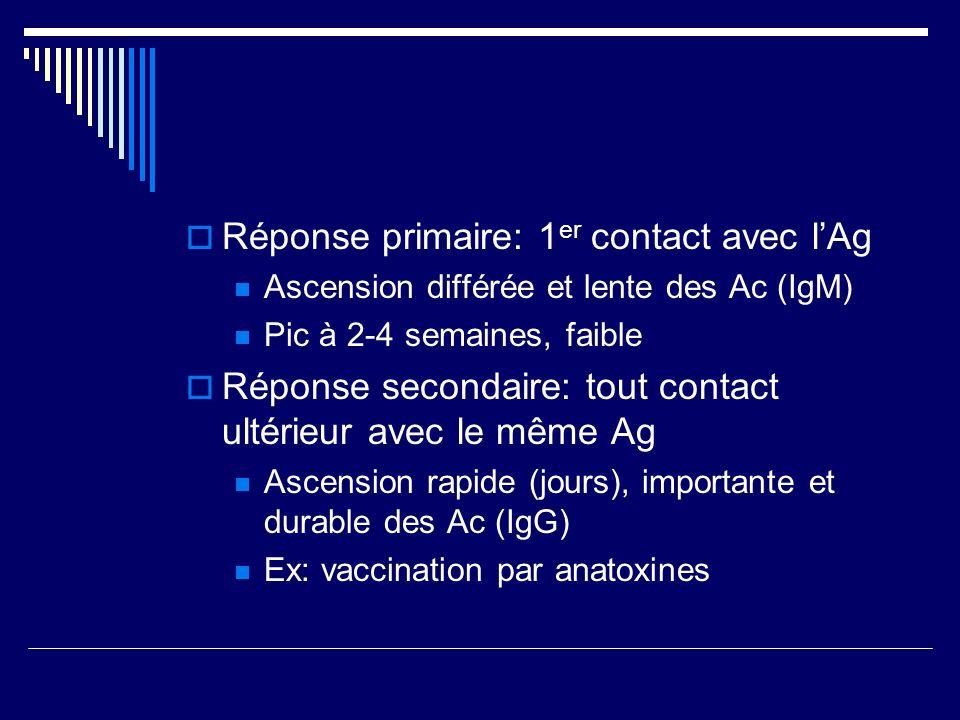 Réponse primaire: 1 er contact avec lAg Ascension différée et lente des Ac (IgM) Pic à 2-4 semaines, faible Réponse secondaire: tout contact ultérieur