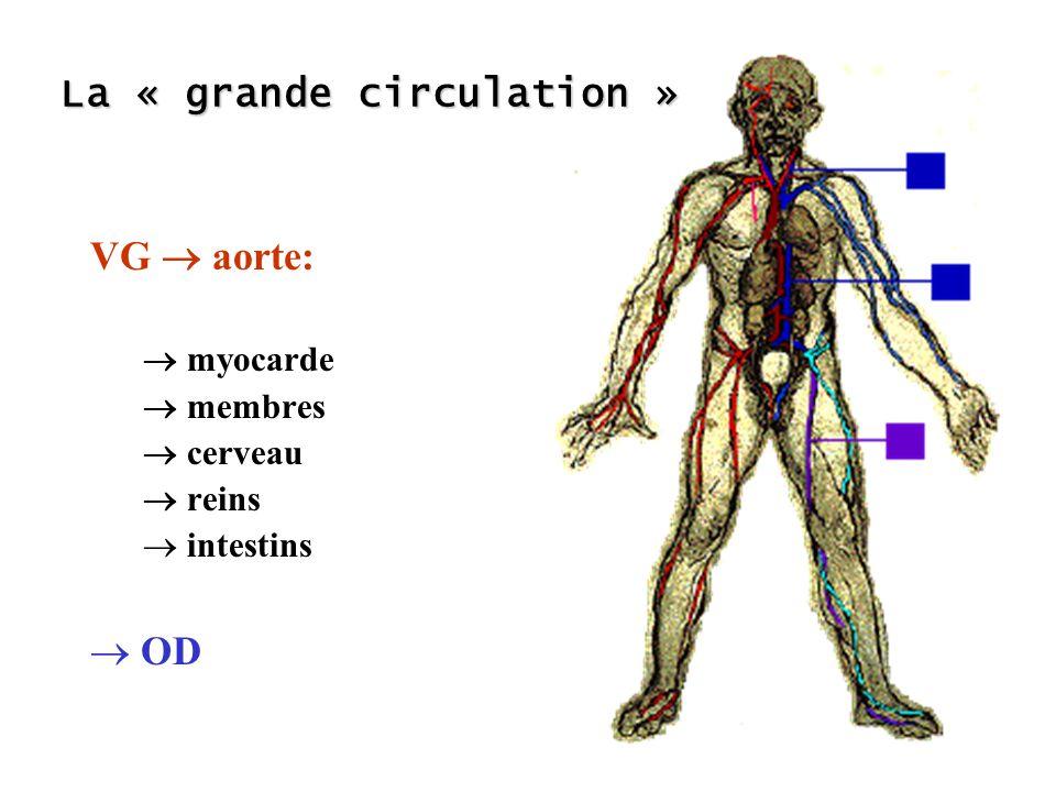 La « grande circulation » VG aorte: myocarde membres cerveau reins intestins OD