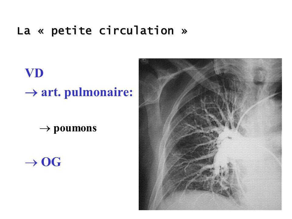 La « petite circulation » VD art. pulmonaire: poumons OG